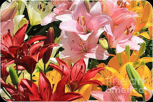 Early Summer Beauties - Daylilies by Dora Sofia Caputo Photographic Art and Design