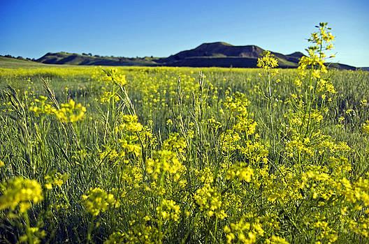 Early to Rise Badlands South Dakota by Kristen Vota