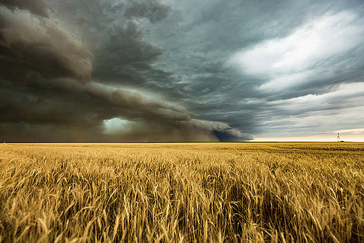 Earth Mover - Storm Advances Over Wheat Field in Colorado by Sean Ramsey