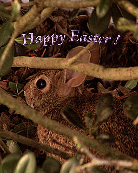 Easter Bunny Card by Adele Moscaritolo