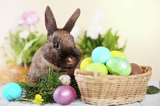 Easter bunny by Iuliia Malivanchuk