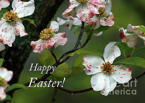 Easter Dogwood by Douglas Stucky