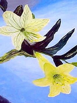 Easter Lilies by Elizabeth A Gawronski