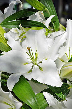 Easter Lily by Maureen Cavanaugh Berry