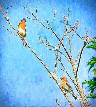 Eastern Bluebird Couple by Kerri Farley