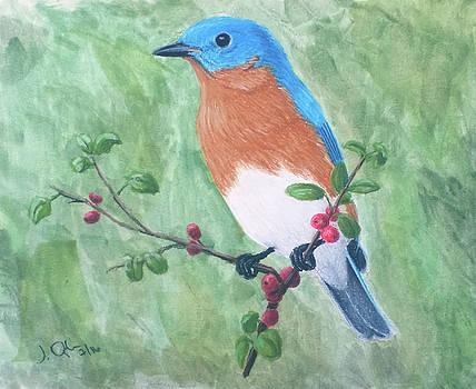 Eastern bluebird by Joseph Ogle