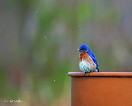 Eastern Bluebird by LeeAnn McLaneGoetz McLaneGoetzStudioLLCcom