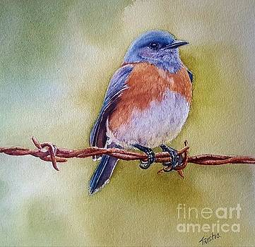 Eastern Bluebird  by Patricia Pushaw