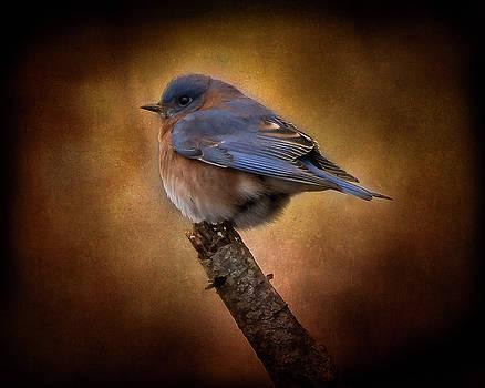 Rosette Doyle - Eastern Bluebird