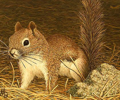 Eastern Pine Squirrel by Marc Dmytryshyn
