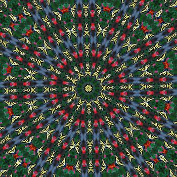 Eastern Swallowtail Butterfly- Kaleidoscope by David Smith
