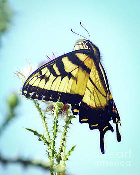 Eastern Tiger Swallowtail Butterfly Is Lovely Company by Kerri Farley