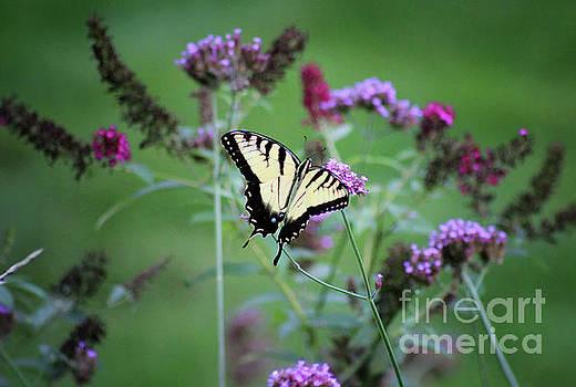 Eastern Tiger Swallowtail in Meadow by Karen Adams