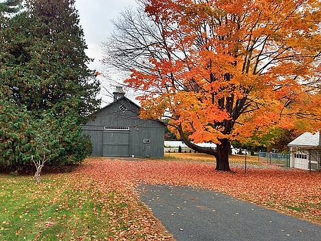 Easthampton Color by Trace Meek