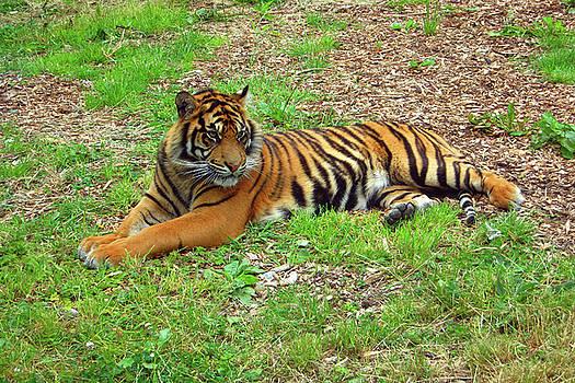 Martina Fagan - Easy Tiger