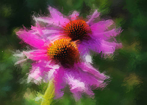 Echinacea at the Sawtooth Botanical Gardens by Amy G Taylor