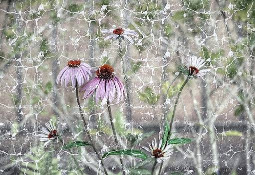 Echinacea by Savannah Gibbs