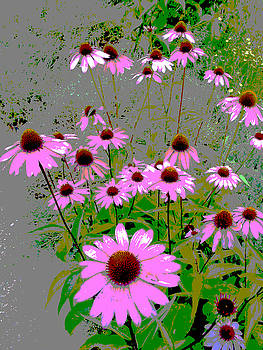 Echinacea by Steve Rudolph