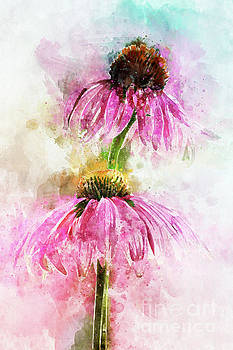 Echinacea Water Splash by Ann Garrett