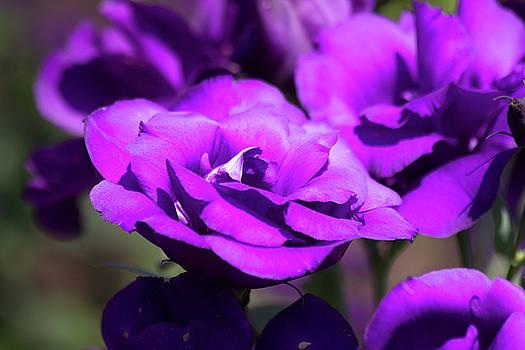 Echo Blue Flower by Mark Michel