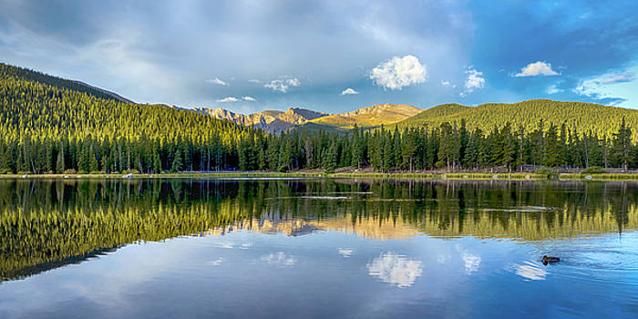 Echo Lake Duck by Lynn Palmer