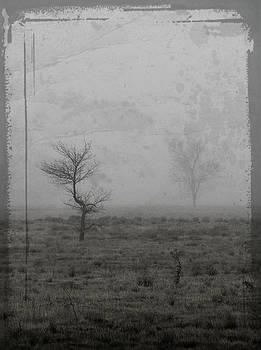Echo by Nadine Berg
