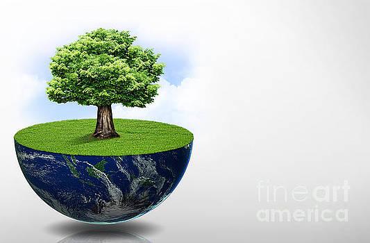 Ecology by Sonya Staneva