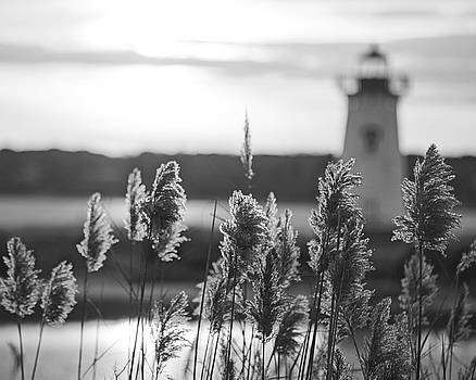 Edgartown MA Lighthouse at Sunrise Martha's Vineyard Cape Cod Reeds Black and White by Toby McGuire