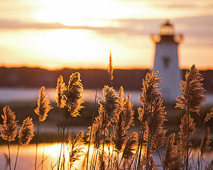 Edgartown MA Lighthouse at Sunrise Martha's Vineyard Cape Cod Reeds by Toby McGuire