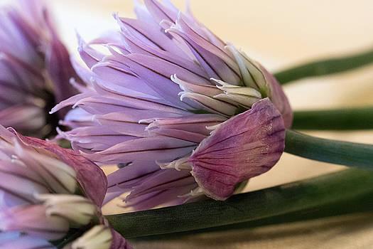 Edible Beauty by Jayne Gohr
