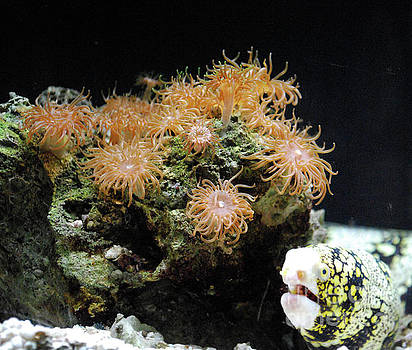 Eel Hanging Beside a Rock Covered with Sea Anemones by DejaVu Designs