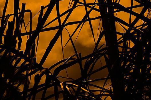 Eerie Attraction by John Knapko