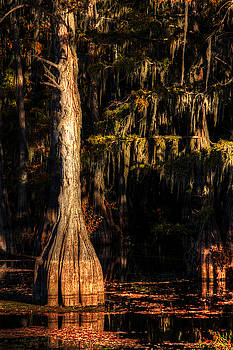Eerie Bayou by Ester Rogers