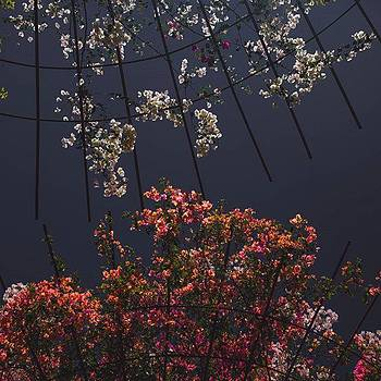 Efflorescence by Casey Asher