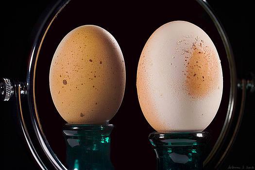 Warren Sarle - Egg in Mirror