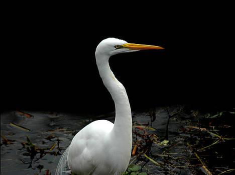 Egret 4 by David Weeks