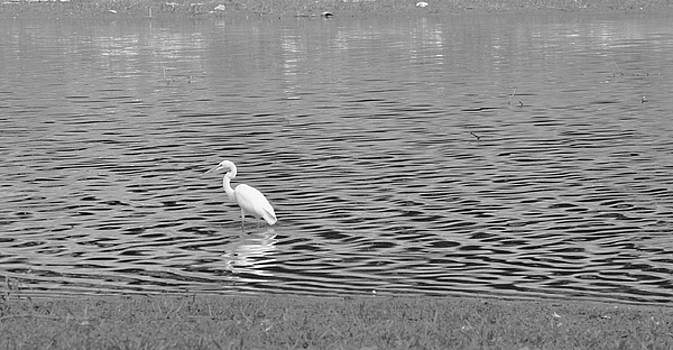 Egret and Water by Vonda Barnett