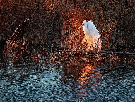 Bill Chambers - Egret at Last Light