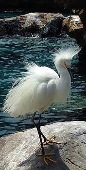 Egret at Seaworld Orlando by Sheryl Unwin
