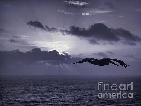 Pelican At Sunrise by Jeff Breiman