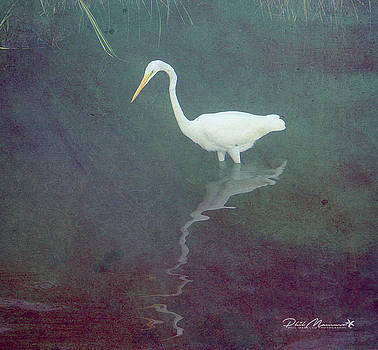 Egret Dreams by Phil Mancuso