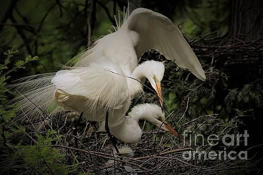 Egret Family by Paulette Thomas