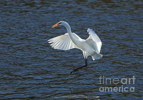 Egret Fishing by Janet Pugh