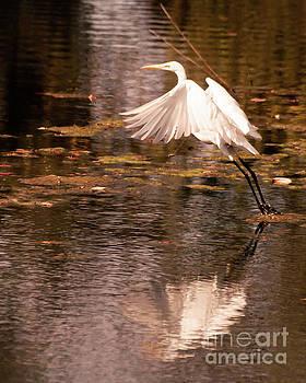 Egret Flight by Susan Cliett