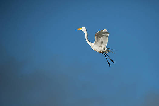 Egret Flying by Catherine Lau