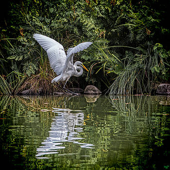 Egret Hunting for Lunch by Chris Lord