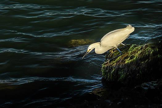 Egret II by Robert Mitchell