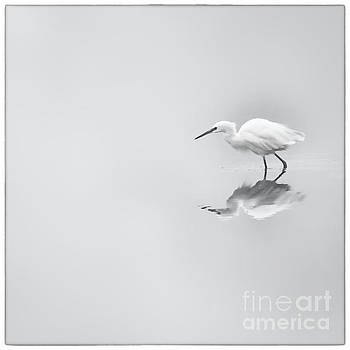 Egret III by James A Crawford