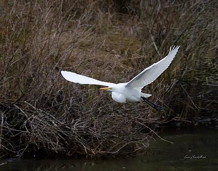Egret in Flight by George Randy Bass