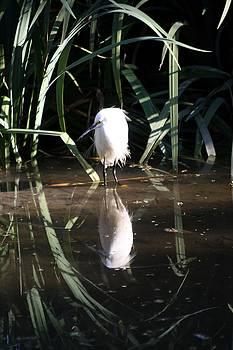 Balanced Art - Egret in Reed